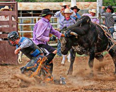 Daniel Unruh Protection Bullfighter