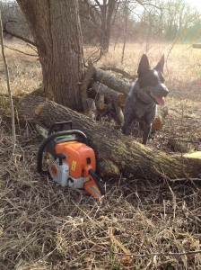 Penny Dog, a stack of hedge, and a dulled chainsaw
