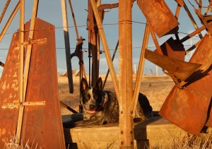 Penny under the McNorton's Windmill